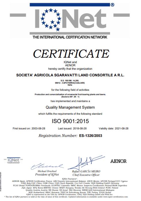 certificato 1
